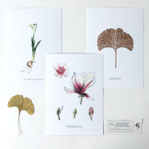 Artprints A5 'Symbotanica Series 2'- By Caroline Vieira